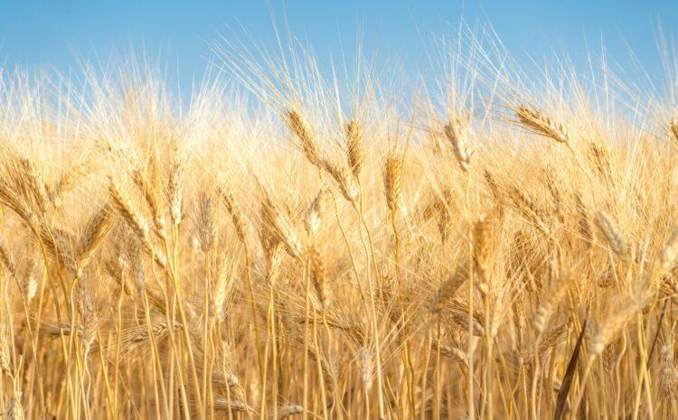 Аграрии, по показателям урожайности, в этом году идут на рекорд!