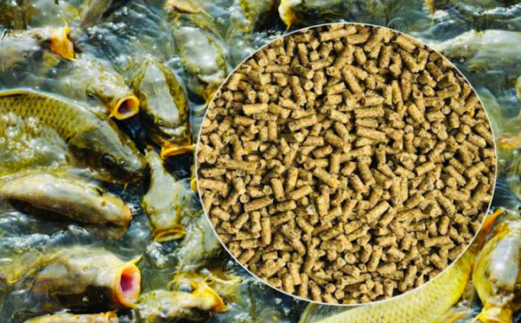 ТзОВ «Агротехніка» виготовляє корми для промислових риб!