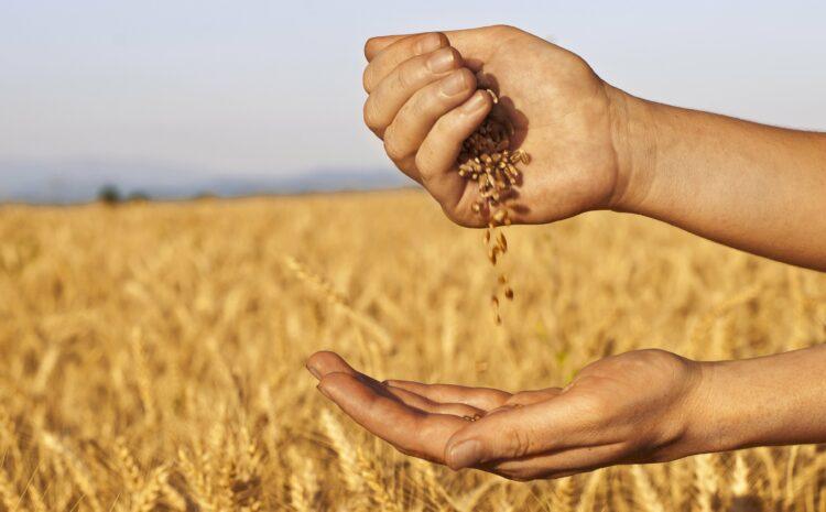 На Волыни продолжает действовать форвардная программа для агропроизводителей!