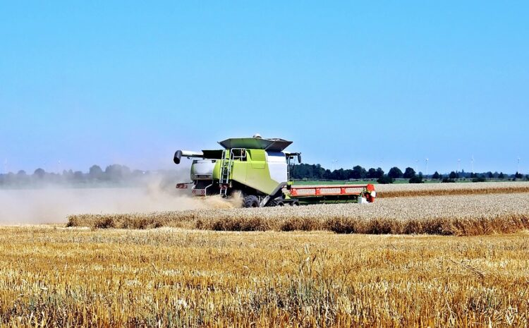Volyn farmers completed the harvest of early grain crops