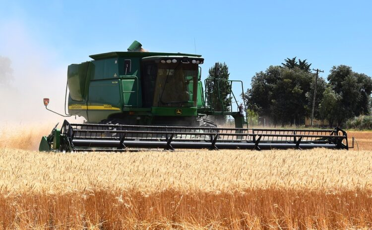 Żniwa 2021: jakie żniwa zebrali rolnicy