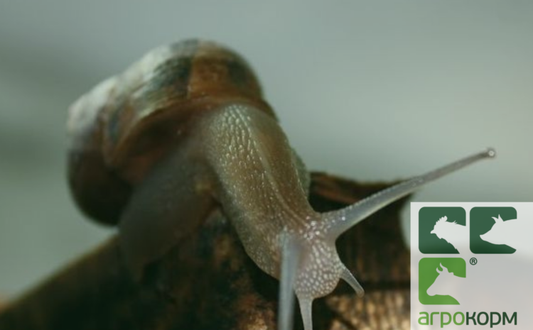"""""""Agrotechnics"""" LLC manufactures to order feed for efficient feeding of snails."""